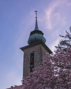Magnolienblüte mit einem Teilausschnitt des Klosterturms und blauem Morgenhimmel